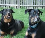 Linus & Krissy, Schaumburg